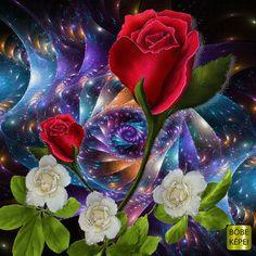 Beautiful Flowers Wallpapers, Beautiful Nature Wallpaper, Beautiful Gif, Beautiful Roses, Pretty Flowers, Iphone Background Wallpaper, I Wallpaper, Flower Wallpaper, Gifs
