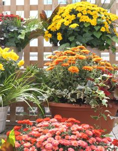 Fall Planter Ideas
