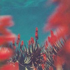 """officialneilkrug: """" Les Lèvres Rouges Photograph by Neil Krug http://instagram.com/neilkrug """""""