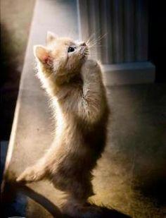 Praying Cat. ♥
