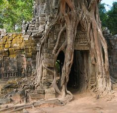 https://flic.kr/p/bgvLtx | Nature took over | Entrance of one of the many Angkor temples. (Cambodia)