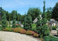 cmb.tallskinnytrees.jpg (600×429)