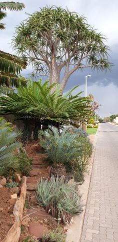 South Africa, Sidewalk, Plants, Side Walkway, Walkway, Plant, Walkways, Planets, Pavement