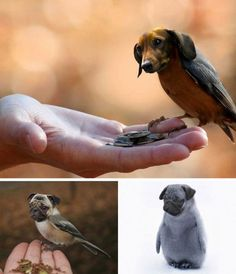 It's A Bird, It's A Dog, It's BOTH! How Dirds Are the Greatest Things in the History of Photoshop