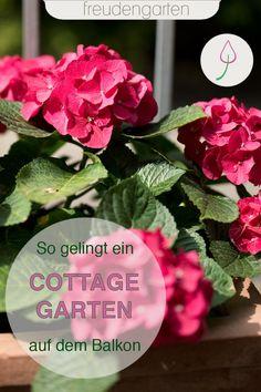 Die schönsten Pflanzen und Blumen für einen Cottage-Garten auf dem Balkon mit Tipps zum Pflegen und Gestalten. #Balkonidee #freudengarten Plants, Flowers, Rose
