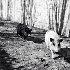 Blanco y negro. #diariodeuninstagramer