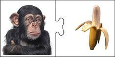 Un juego con fotos. Mírame y aprenderás en Facebook Montessori Materials, Montessori Activities, Teaching Kids, Kids Learning, Fruit Animals, Animal Antics, Animal Habitats, Speech Therapy, Monkey