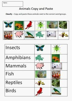 Animals Copy and Paste Students use copy and paste to classify insects, amphibians, mammals, reptiles, fish, and birds. Students use the...