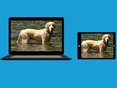 How to Resize Your Photos for Easier Online Sharing