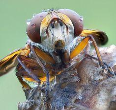 Macro shot of bug- amazing detail