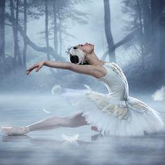 Swan lake!