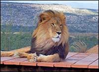 Out of Africa Wildlife Park, Camp Verde AZ (April 2012)