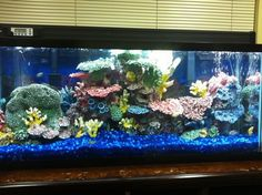 1000 images about my dream aquarium ideas on pinterest for Dream of fish tank