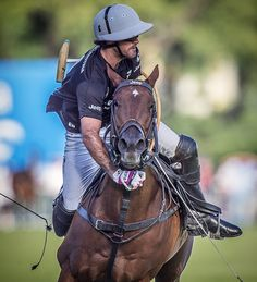 Polo Horse, Polo Team, Sport Of Kings, Polo Club, Horse Riding, Dressage, Equestrian, Riding Helmets, Race Horses