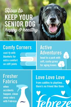 Here's a few easy pet care tips to keep your senior dog happy. From softening up your home with blankets to freshening up their favorite spots with Febreze Fabric Refresher, you can make sure your old dog always feels like a pup at heart while getting rid Pet Care Tips, Dog Care, Training Tips, Dog Training, Training Collar, Training Classes, Training Videos, Training Academy, Training School