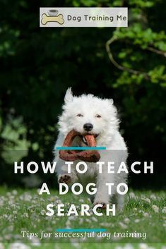 Learn how to teach a dog to search for something with these simple steps and tips. Teaching new tricks is a good way to keep your dog physically and mentally fit. Click through for our tips and advice now. #howtoteachadogtosearchforsomething #dogtraining #dogtricks #teachadogtosearch #trainingadog #dogtips