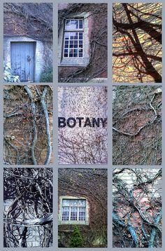 Botany my esay