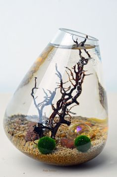 Marimo Terrarium Japanese Moss Ball aquarium in by PinkSerissa