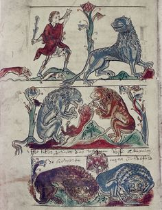 FCBTC / Medieval Bestiary : Lion Gallery. Bodleian Library, MS. Bodley 602, Folio 1v  The three natures of the lion: When hunted, it erases its tracks with its tail; the cubs are born dead and after three days the father roars over them to bring them to life; they always sleep with their eyes open.