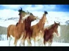 funny budwiser snowball fight - horses