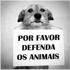Federal District Government: Create a specialized police in the mistreatment of animals in Bresil Love Pet, I Love Cats, Animals And Pets, Cute Animals, Local Personals, Dog Tumblr, Dog Nose, Cute Friends, Beautiful Dogs