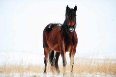 Snow Horse! :)