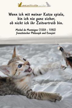 Der Mensch als Zeitvertreib der Katze 😉  #sprüche #katze #weisheiten Essayist, Dog Cat, Cats, Animals, Inspiring Sayings, True Words, Sunday, Gatos, Animales