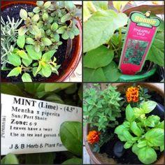 Creating a Sensory Garden for Kids