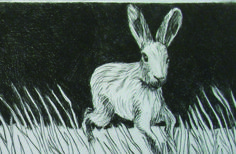 Haresfield - Drypoint - Di Oliver