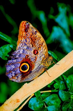 Butterfly by Chris Taylor on 500px