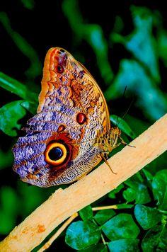 """""""A alma é uma borboleta... há um instante em que uma voz nos diz que chegou o momento de uma grande metamorfose..."""" (Rubem Alves) Butterfly by Chris Taylor on 500px"""