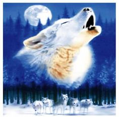 Wolf Howling with Pack of Wolves 50x60 Polar Fleece Throw Blanket