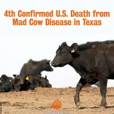 the mad cow disease vcjd causes risks and effects Can people get mad cow disease a humans can contract a tse from eating certain kinds of meat from cattle infected with bse this human form of the disease is known as variant creutzfeldt-jakob disease (vcjd).