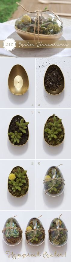 DIY_easter_gold_eggs_succulents (can I do this with plastic egg containers? Terrarium Cactus, Terrariums Diy, Spring Crafts, Holiday Crafts, Holiday Fun, Easter Gift, Easter Crafts, Partylite, Easter 2018