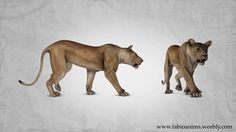 Walk and Run lioness animation cycles I made when I was on finals for Full Sail University, on Nov 2013. Modeler:Attakarn Vachiravuthichai Rigger: Luiz Phillipe…