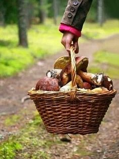 Gardening Autumn - panier a champignons - With the arrival of rains and falling temperatures autumn is a perfect opportunity to make new plantations Country Life, Country Living, Wild Mushrooms, Stuffed Mushrooms, Edible Mushrooms, Peter Wohlleben, Autumn Inspiration, Farm Life, Four Seasons