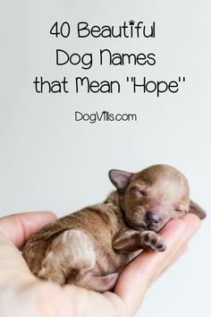 40 Beautiful Dog Names That Mean Hope If you're looking for dog names that mean hope, you've come to the right place. Read on to find beautiful ideas for both male and female dogs. Girl Dog Names Unique, Beautiful Dog Names, Cute Names For Dogs, Puppies Names Female, Dog Names Male, Chihuahua Names Boys, Female Puppy Names Unique, Female Pet Names, Cute Dogs Breeds