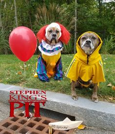 Pennywise and Georgie - Halloween Costume Contest Cute Dog Halloween Costumes, Diy Dog Costumes, Animal Costumes, Dog And Owner Costumes, Chien Halloween, Halloween Cat, Cute Funny Animals, Funny Animal Pictures, Cute Puppies