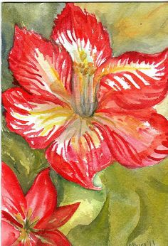 Red and white amaryllis  ART original watercolor painting