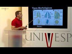 Biologia Geral - Aula 17 - Reino Metazoa, Lophotrochozoa - YouTube