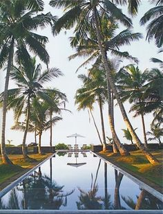 Sri Lanka dreaming - how great is this palm fringed pool? #resort #paradise