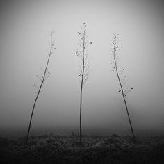 Dino Lupani | Young poplars