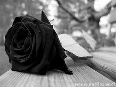 ESPECIARIAS: Carta Aos Amigos Mortos