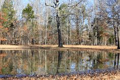 The bloody pond at Shiloh National Battlefield. A favorite place for a crisp March morning walk. Just thru the tree line you will find yourself at the Peach Orchard. Both are a must see.