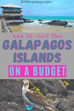 Ecuador's incredible Galapagos Islands are a Bucket List destination for many intrepid travelers. The most popular way to visit the islands is by expensive expedition cruises. But if you're dreaming of visiting the Galapagos Islands on a budget, there is another way! You can find great hotels on the islands Best Solo Travel Destinations, Top Honeymoon Destinations, Romantic Destinations, Amazing Destinations, Best Romantic Getaways, Romantic Travel, Beach Trip, Beach Travel, Galapagos Islands