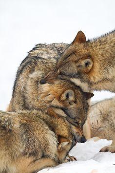 """sisterofthewolves: """" Picture by Jürgen Borris """""""