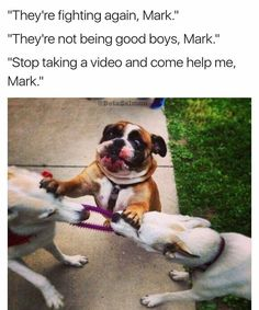 20 Hilarious Animal Memes For Your Sunday - I Can Has Cheezburger? 20 Hilarious Animal Memes For Your Sunday - World's largest collection of cat memes and other animals Funny Animal Jokes, Funny Dog Memes, Funny Animal Pictures, Cute Funny Animals, Animal Memes, Cat Memes, Cute Baby Animals, Funny Cute, Funny Dogs