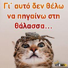 Καλημέρα! Να τι παθαίνει όποιος πηγαίνει στη θάλασσα..! Cats, Funny, Animals, Gatos, Animales, Animaux, Funny Parenting, Animal, Cat