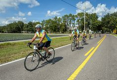 Nearly 100 cyclists and tree enthusiasts will take part in the STIHL Tour des Trees Oct 9-15 to raise over $200,000 and awareness about the importance of trees. https://greenlivingaz.com/cyclists-ride-600-miles-to-save-americas-urban-forests/?utm_campaign=.&utm_medium=.&utm_source=pinterest