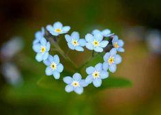 Love makes ur life blossom'♥